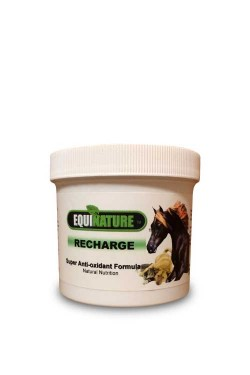 Recharge-anti-oxidant-horse